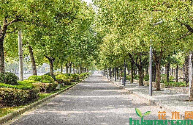 日照新增绿化面积279.1万平方米