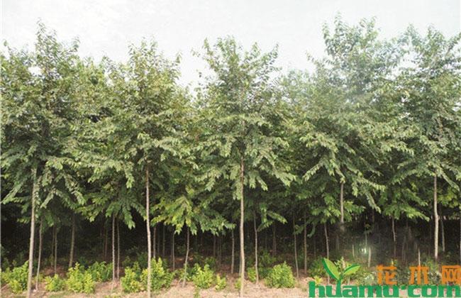 苗木产品的时代论