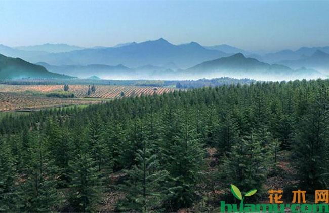 伊通全面掀起植树造林热潮
