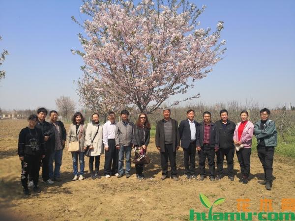 专家组现场审定红花早樱新品种'名贵红'.jpg