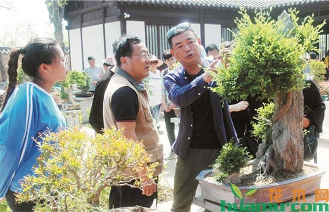 河南商丘举办唐庆安盆景艺术展