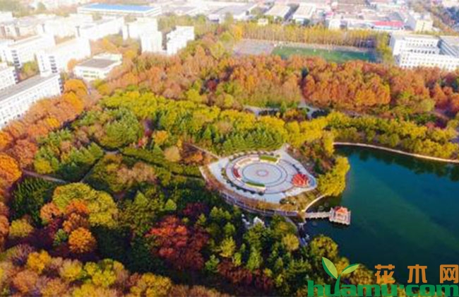 山东莱阳:十里绿廊再升级 专用步道惠民众