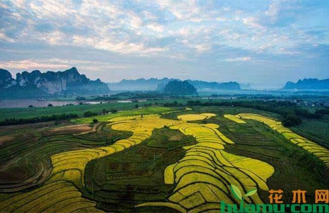 广西上林县生态旅游养生节项目签约1.38亿元