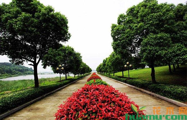 郑州:家门口成小花园 市容市貌大幅提升