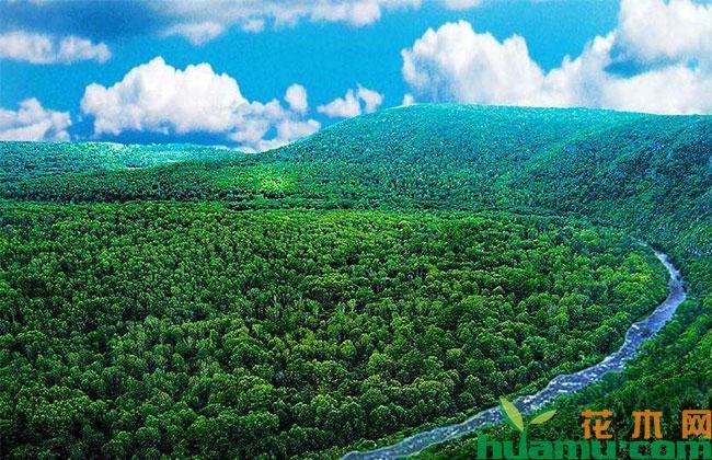 绿色金融发展推动乡村振兴
