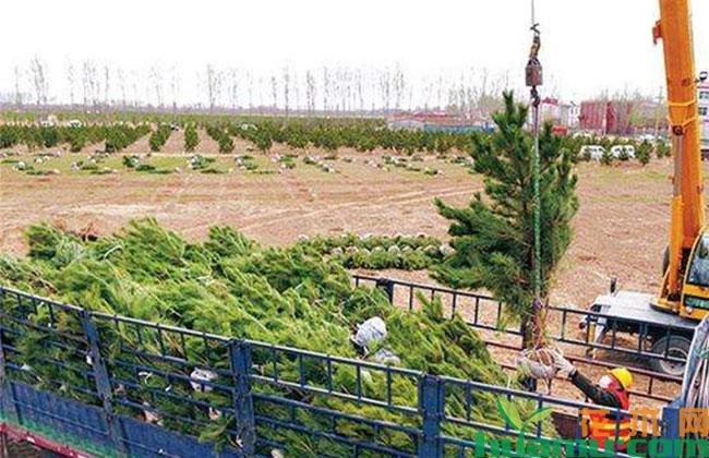 雄安新区今春计划造林6万多亩