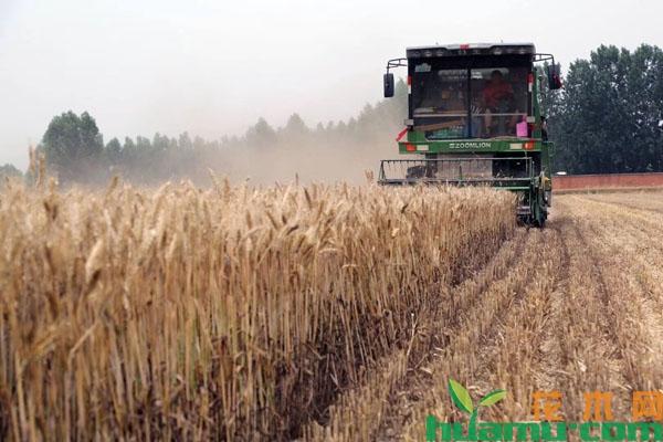 2019年粮食补贴政策调整
