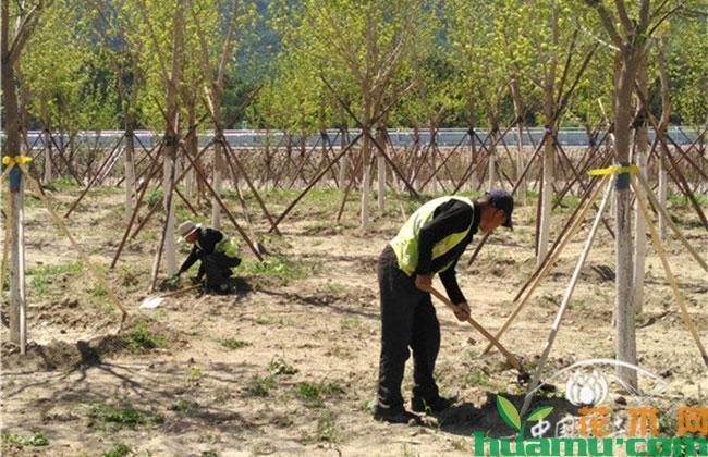 北京新增造林17.8万亩 已经完成全年任务的八成