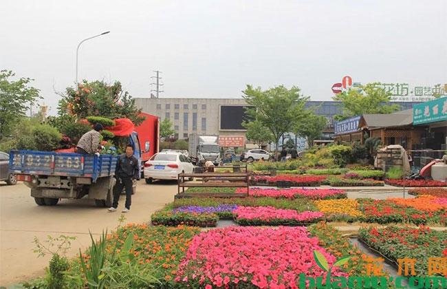花卉产业未来发展分析