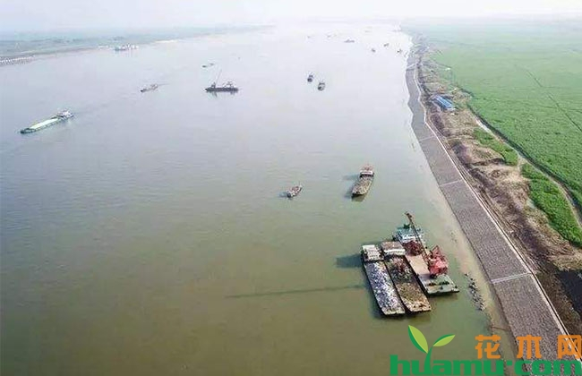 泰兴划出半数长江岸线建设生态湿地、绿色廊道