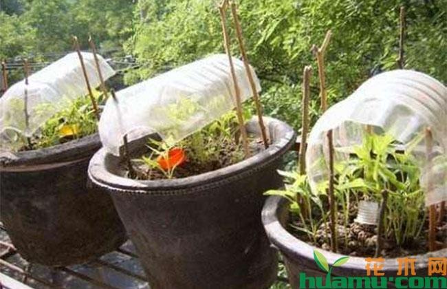 教你用旧报纸、鸡蛋壳、破油桶种花,半个月出芽百分百成活