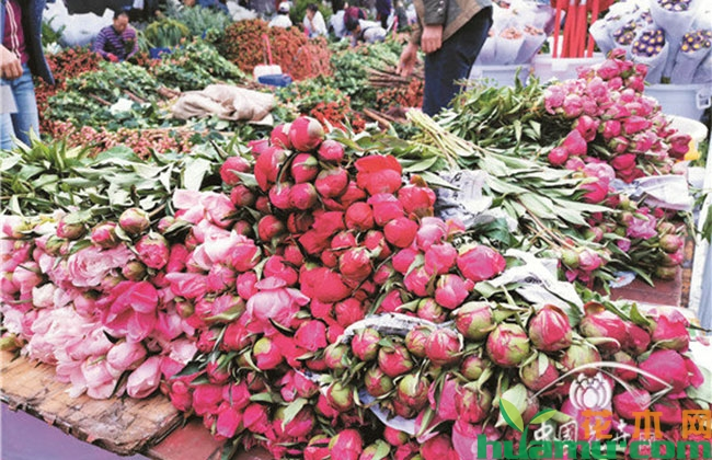 芍药切花市场混乱,有什么行业标准?