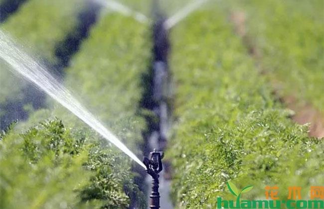 夏季苗圃管理有哪些养护措施?