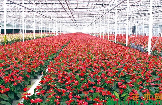 2019全国花卉产销形势分析报告出炉