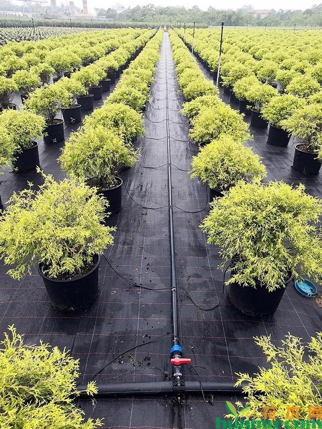 武汉这个新苗圃真厉害, 震惊欧洲同行!