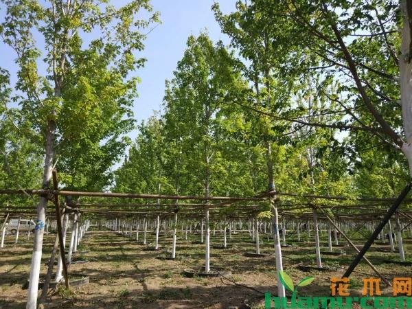 江西奉新:造林容器苗热销 精品苗回暖