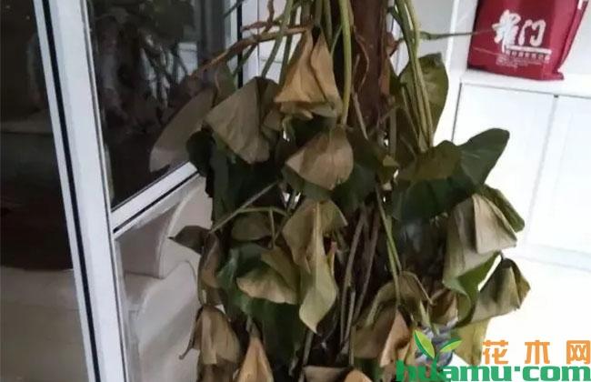 花木养护过程中的救治方法