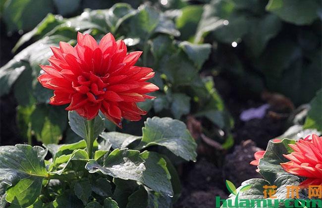 郑州盆花市场放缓价格下滑