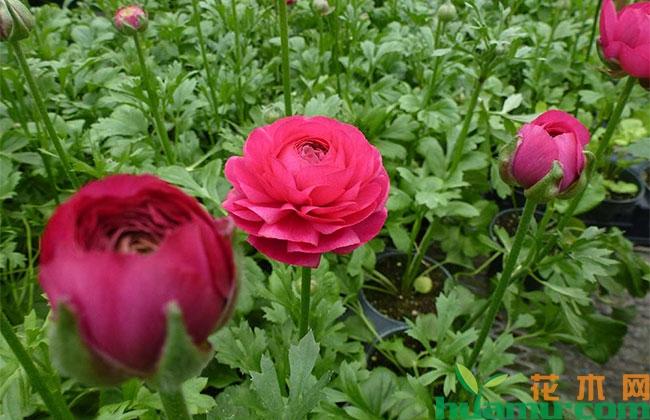 目前花卉市场面临多方压力