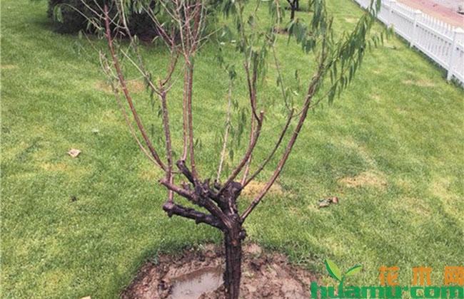 园林植物根腐病该怎么防治?