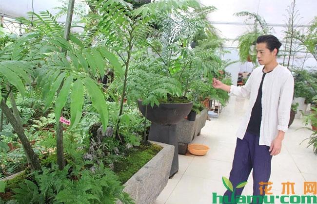 """这个苗木人用蕨类植物玩出""""花样"""""""