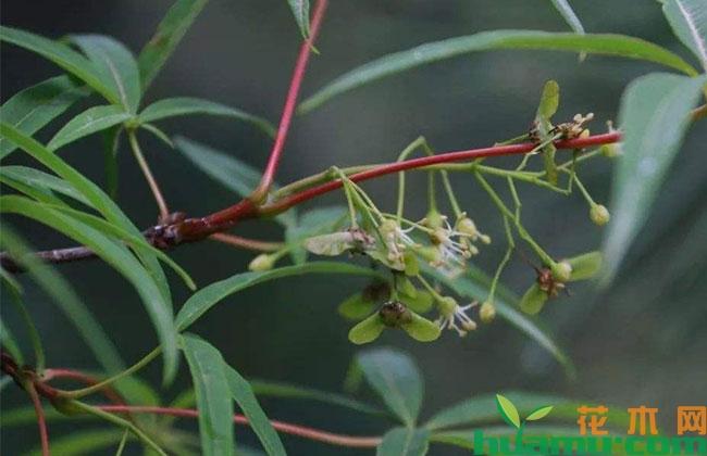 世园会再现中国珍稀濒危植物