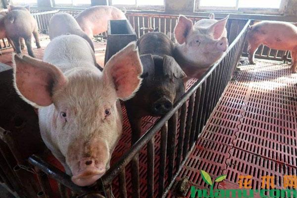 农村禽畜禁养,农民该怎么办?