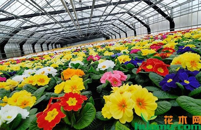 新品种花卉助力产业创新发展