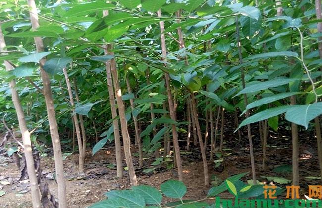 植物新品种保护能够促进行业发展进步