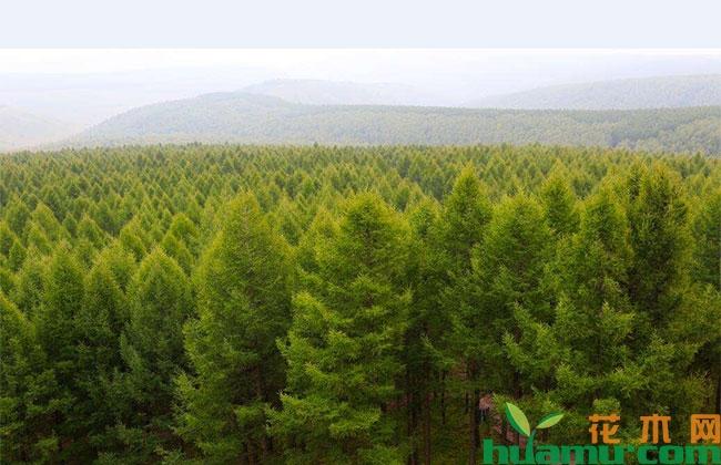 从造林护林到种苗培育