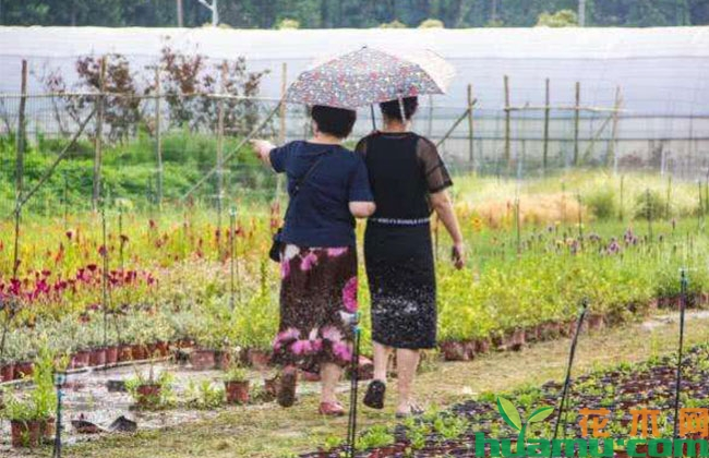 农村夫妻种花木20年,靠技术赢得市场