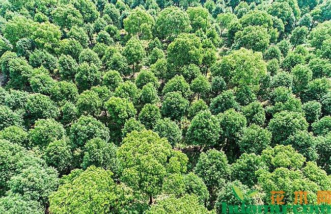四川省锁定今年林业病虫害防治目标
