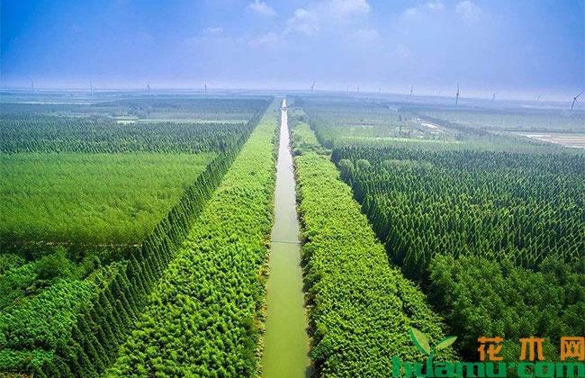 """北京对151万亩平原生态林开展""""精细养护"""