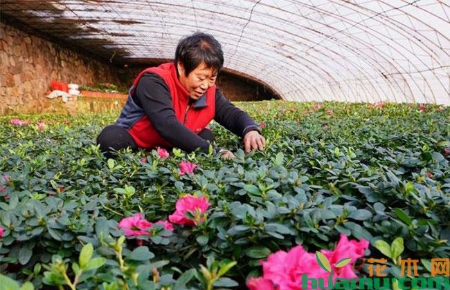 引进花卉园艺场 村民家门口就业