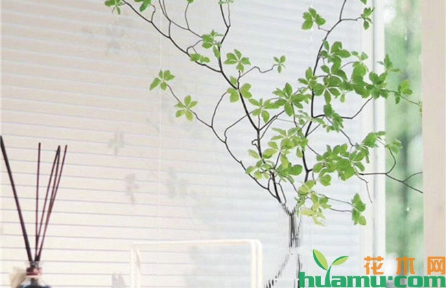 植物软装,感受绿色能量