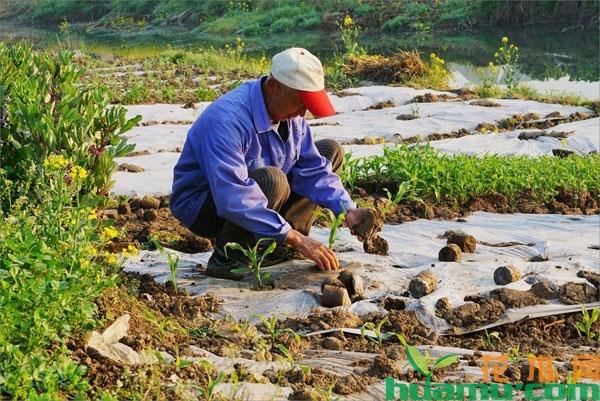 国家加强惠农补贴发放的监管