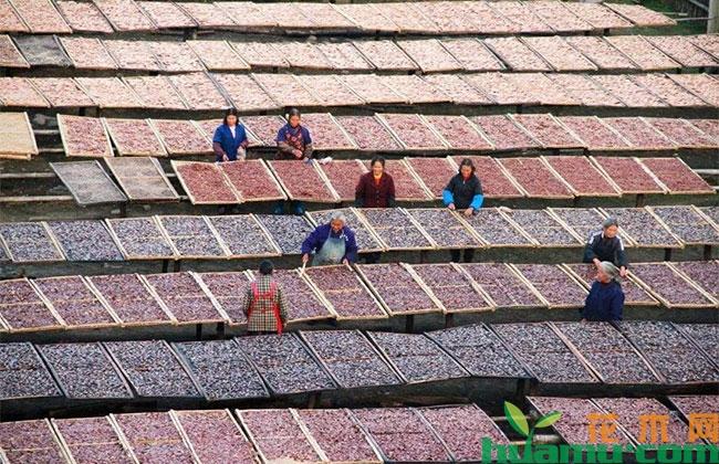 农村扶贫政策有哪些?农民从事哪些项目有补助?
