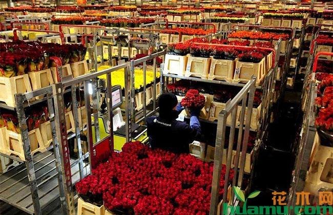 鲜花电商怎么做?