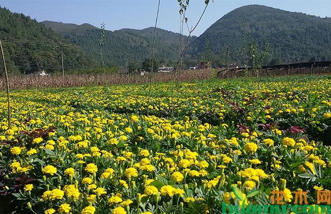 青州市创建山东省优质花卉基地品牌