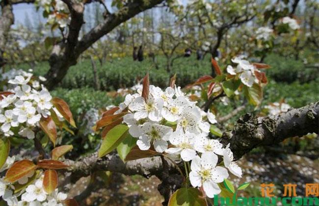 园林苗木选择和栽种前的准备