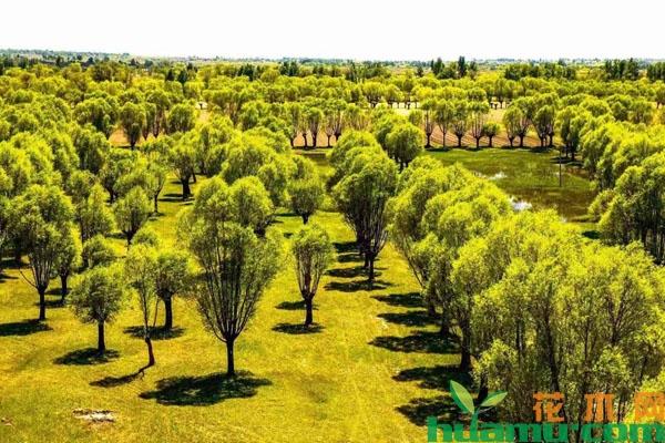 新一波生态热潮来了!各类生态修复工程都在用这些树