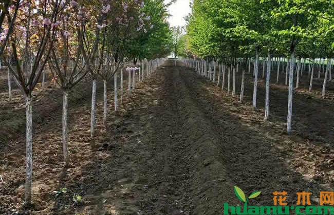 天然林保护修复工作持久推进