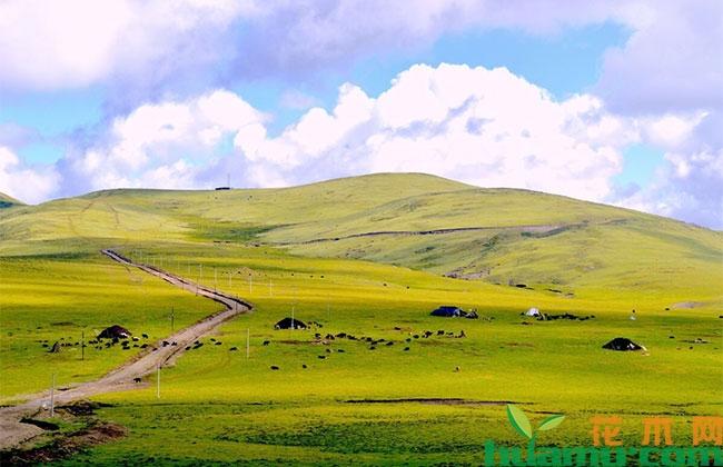 甘肃:以考核为抓手 推进草原保护