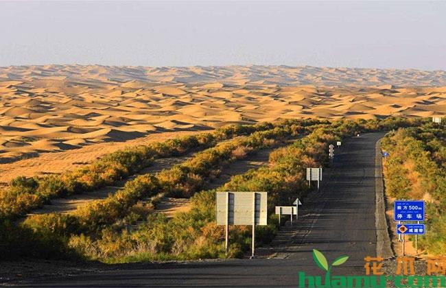 库布其沙漠开出生态文明之花