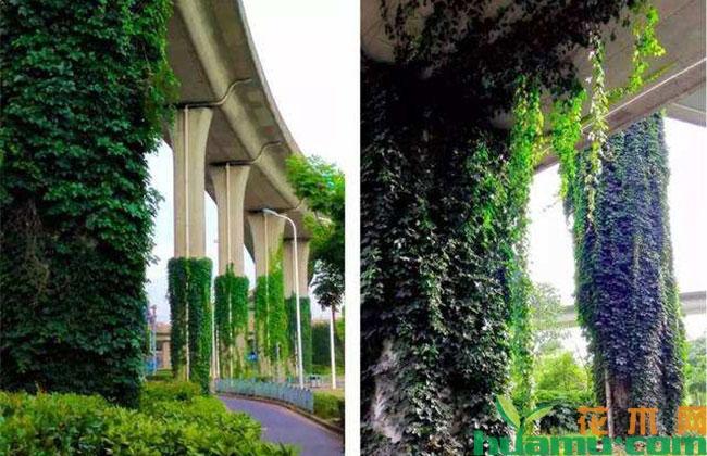"""安徽高架桥打响""""绿化保卫战"""""""