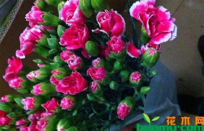 我国花卉进出口贸易呈上升趋势
