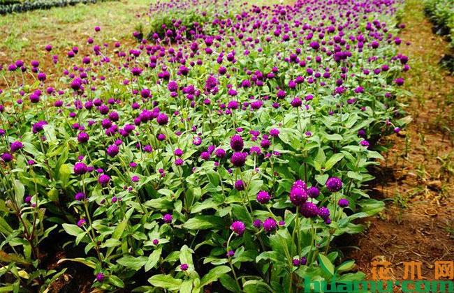 上半年阜阳市新增花卉种植面积近12万亩