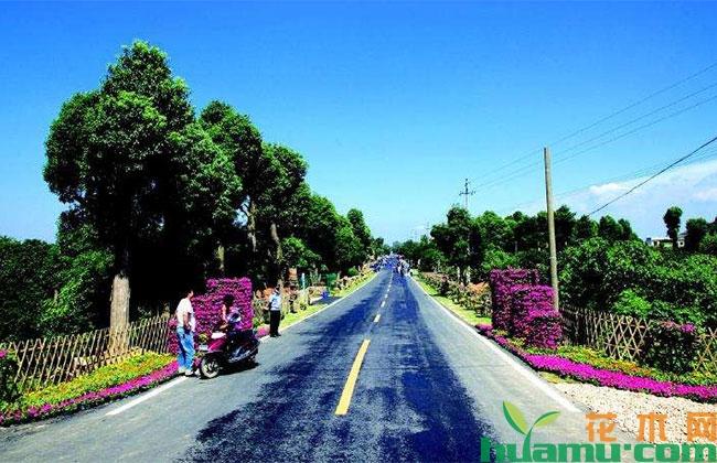 湖南:长沙、株洲、湘潭大力发展花木产业