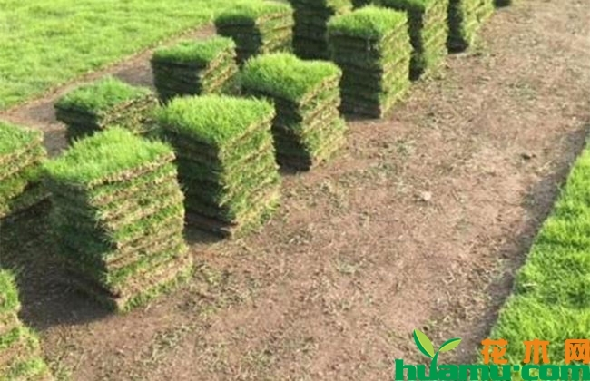 郴州小草皮托起村民绿色致富梦