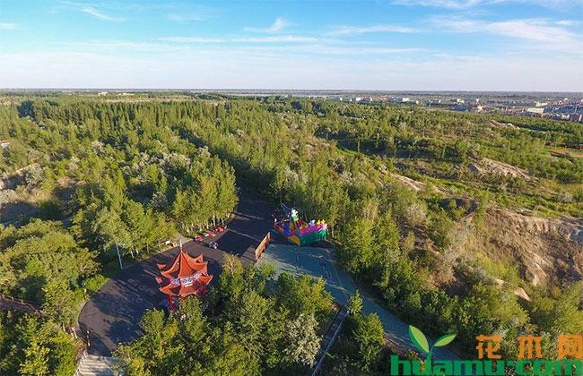 内蒙古阿拉善盟全部完成今年新造林生产任务